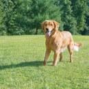 Unsichtbarer Hundezaun 27,5m Radius »Drahtlos Comfort« · ab 3,6kg