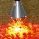 Stalllampe »Plus« für Infrarot Rotlicht · Sparschalter, 2,5m oder 5m